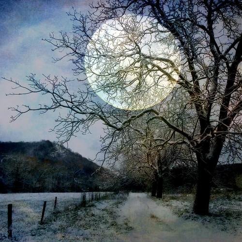[フリー画像素材] グラフィック, フォトレタッチ, 樹木, 道路・道, 月, 雪 ID:201302261200