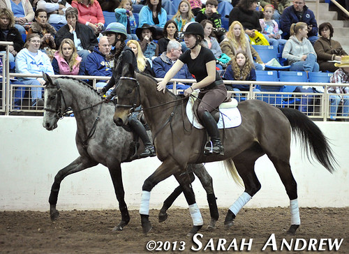 Suave Jazz plays the role of lead pony and helps Gunport settle her nerves at the PA Horse World Expo