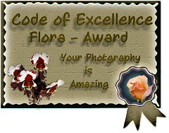 CoE Final Flora Award