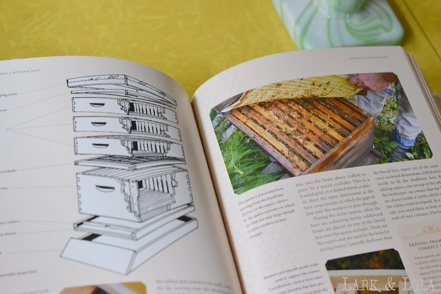 The Beekeeper's Bible - hive design
