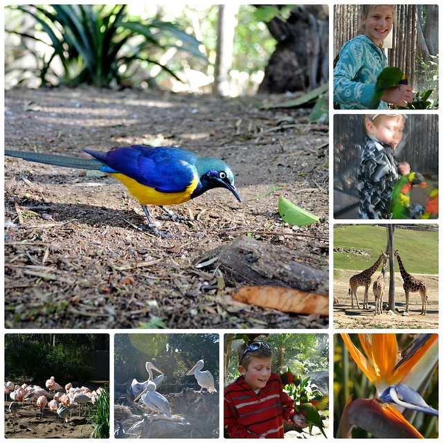 Zoo Safari Collage