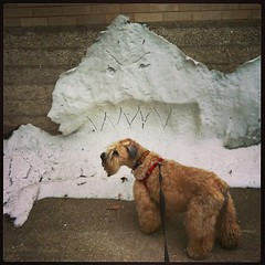 Look outs, Ella! Snow Monster iz hongree!