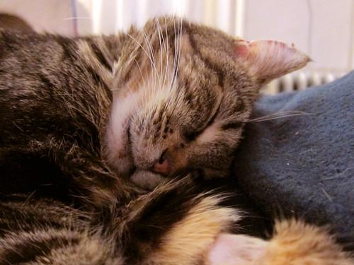 Mabel nap
