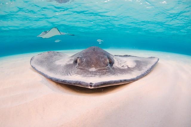 Stingray-Cayman-Sandbar 509