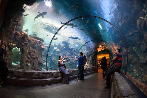 Las Vegas for young kids - Shark Reef tunnel