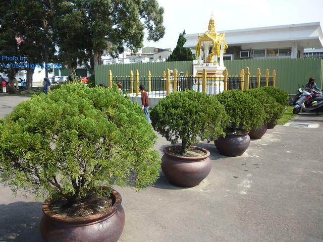 室外盆栽佈置