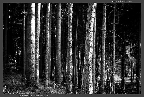 Bäume by spiegellos