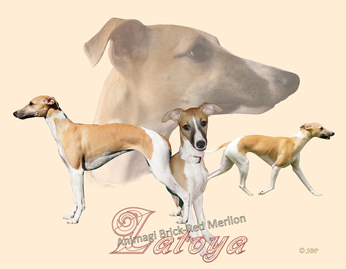 Collage Latoya 2013