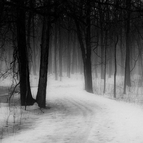 trees winter blackandwhite bw mist snow monochrome misty fog forest square landscape blackwhite woods nikon foggy hellernaturecenter d5000 noahbw bestevercompetitiongroup creativephotocafe