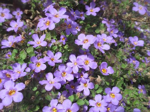 March 29: Purple Flowers