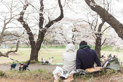20130401_01_お花見
