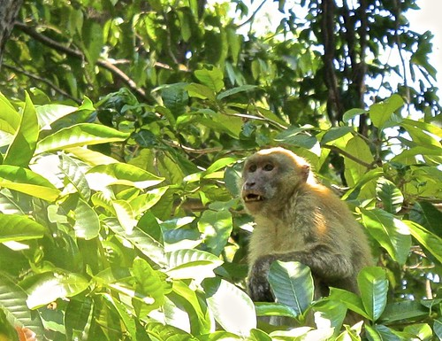 this monkey didn't like us watching her and her kid (who stayed out of sight)
