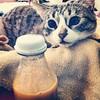 Miss W: Just add juice... detox!