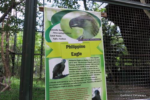 philippine-eagle-manila.jpg