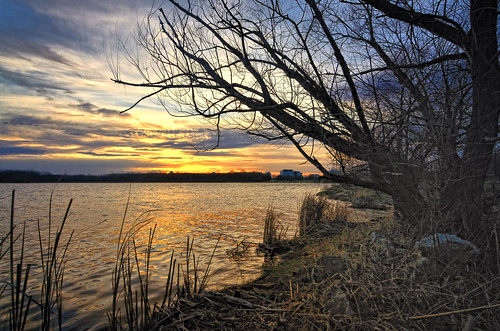 trees nature water lakes sunsets odc cookcountyforestpreserve tokina1116mmf28 ourdailychallenge busseforestnaturepreserve