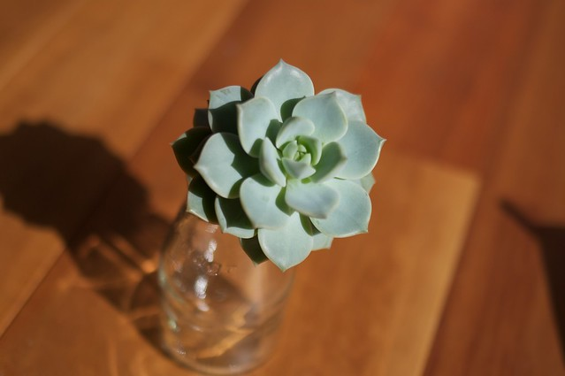 Succulent plant#2 April 16,2013