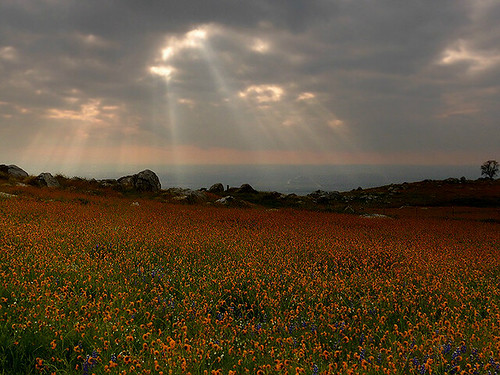 High Beams on Wildflowers