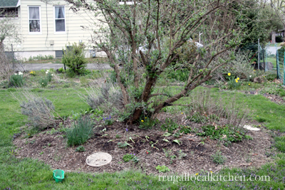 Spring Planting Update: Herb Bed