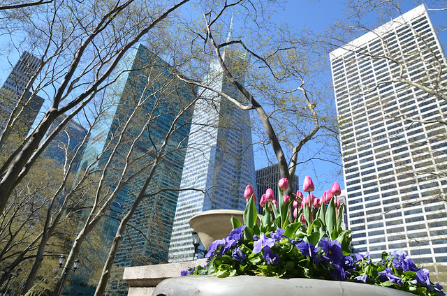 Flowers in Bryant Park