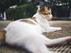 Cat 154: Take it easy