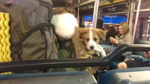 KITTY! AND PUPPY! On a bus. by christopher575
