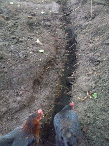 allotment drainage Apr 13 1