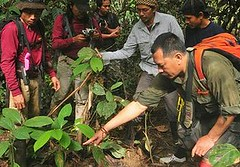 WWF印尼分會野外調查小組在東加里曼丹發現犀牛蹤跡(照片由WWF印尼分會提供)。
