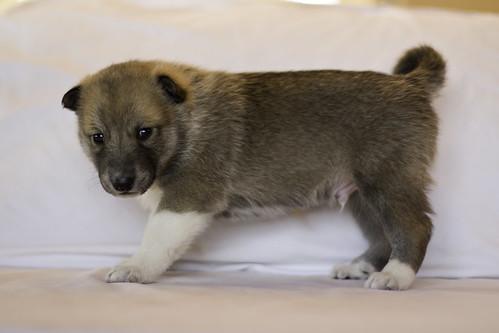 Ike-Kilbe-Pup4-Male(Day 22)-3