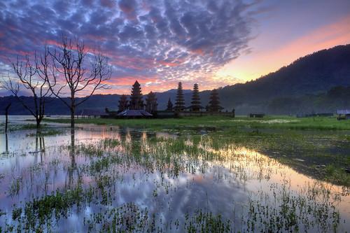 Tamblingan Morning Reflection, Tamblingan Lake, Bali - Indonesia