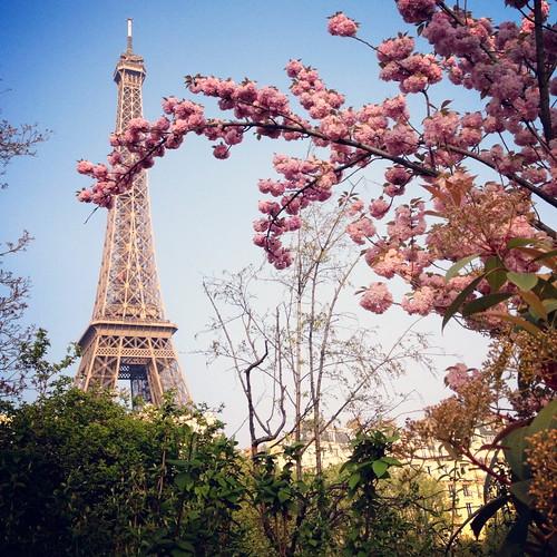 A beleza das cerejeiras em Paris