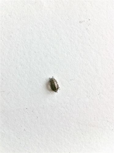 I Think I Found A Bed Bug