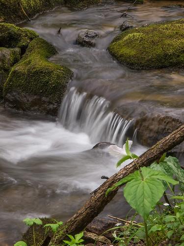 Trillium beside brook