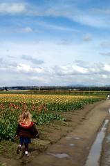 Running through the tulips