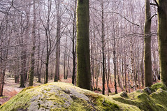 Penny Rock Wood