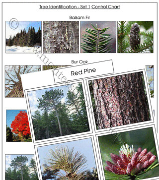 Tree Identification Cards, Set 1, from Montessori Print Shop