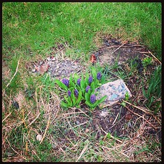 Spring flowers.  Not sure where the paperback came from. #flowers #springblooms