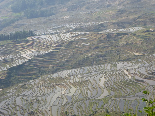 Yunnan13-Yuanyang 5 (10)
