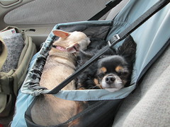 Itzl and Xoco Going Home