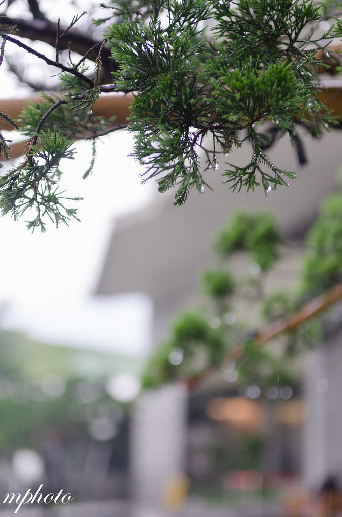 雲林 華山觀止虫二行館 『許小M美食分享』