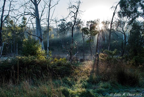 Misty morning at Birdsland Reserve