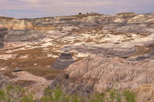 Petrified Forest-Painted Desert-6