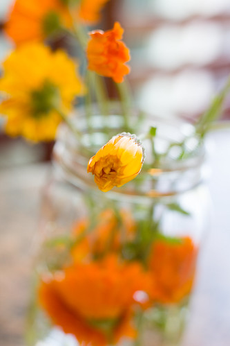 Flowers-20