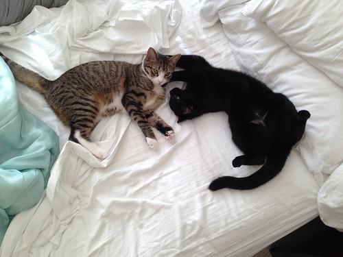 Amelia and Martha Kittens