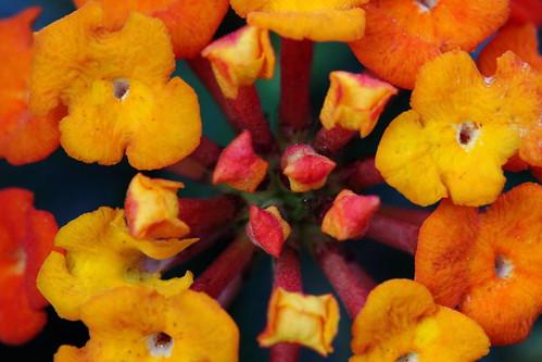 IMAGE: http://farm9.staticflickr.com/8114/8601277391_c7ca00914e.jpg