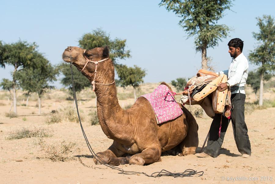 наездник верблюдов в индии