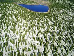 Forêt d'épinettes dans le nord du Québec