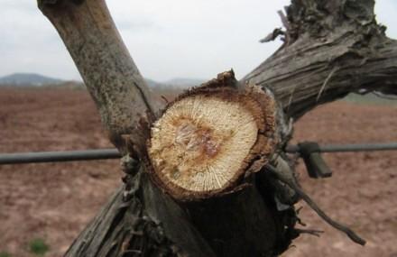 Enoturismo Lloro de la Vid Vino Bodega Rioja