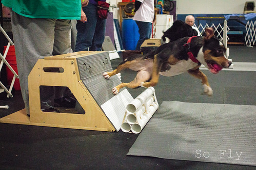 Flyball Practice April 2013-1520