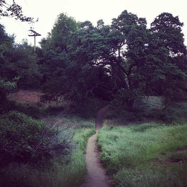 The path to stress relief #eveningwalk