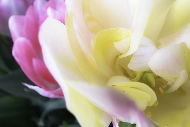 花咲く花壇-4